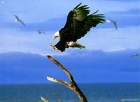 eagle05_800x600