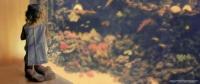 La fillette qui éclaire l'aquarium